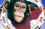 Год желтой земляной собаки для обезьяны.