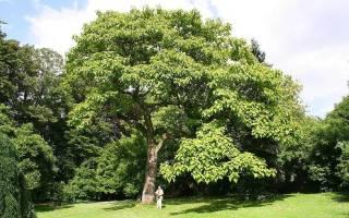 Видеть во сне посаженные деревья. К чему снится дерево по соннику