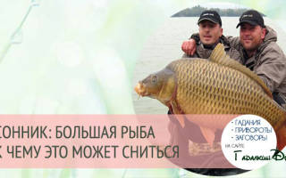 Сонник ловить во сне огромную рыбу. «Сонник поймать большую Рыбу приснилось, к чему снится во сне поймать большую Рыбу