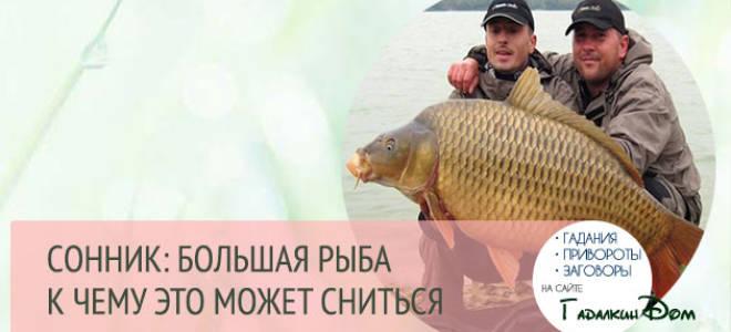 Поймать большую рыбу во сне мужчине. К чему снится ловить и поймать большие рыбы? Чем полезны для человека? Сонник — Коты