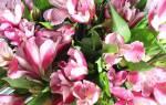 К чему снится подарок цветы. Если снится, что дарят свежие цветы: варианты значения сновидения