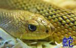 Китайский гороскоп на год змея. Гороскоп для мужчины