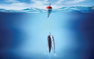 К чему снится рыбалка женщине. Сонник: рыбалка, к чему снится рыбалка — полное толкование снов