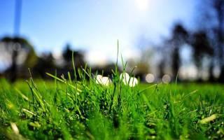 К чему снится бежать по высокой траве. Как грядки во сне трактует Хассе