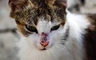 К чему снится раненый кот женщине. К чему снится раненый кот