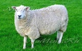 Мастерская аналитики и прогнозов кань-ю. Год деревянной зеленой овцы козы