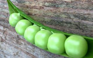Во сне собирать горох зеленый. Что значит горох во сне? Сонник от А до Я