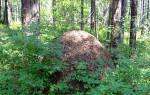 К чему снится муравейник. Муравейник толкование сонника
