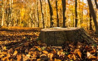 К чему снится пенек от дерева. К чему снится пень