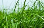 К чему снится черная трава. К чему снится ребенку Трава, толкование сна