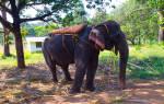 Сон, в котором вы убегали от слона. Генетическая теория происхождения