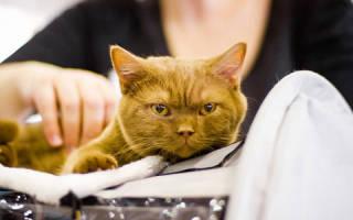 К чему снится кот метит территорию. К чему увидеть кота во сне? Кормить, гладить, купать, играть с животными