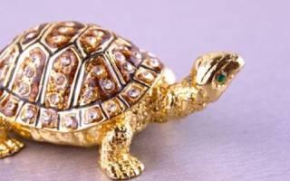 Что означает черепаха. Свойства и значение талисмана черепахи