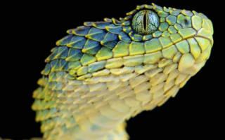 К чему снятся змеиные головы. Сонник: к чему снится змея