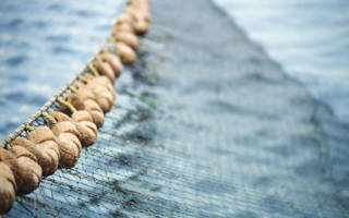 К чему снятся рыболовные сети. Рыболовная сеть по соннику