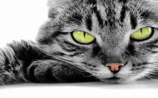 Приснилось что я превратилась в кошку рыжую. К чему снится кошка женщине? Сонник кошка