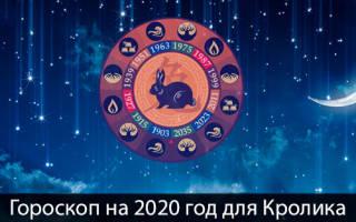 Новый год гороскоп по знакам зодиака. Гороскоп для родившихся в год Кота или Кролика