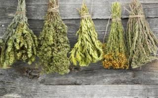 Целебные и магические свойства растений. Магическое значение трав: секреты предков