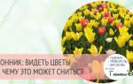 Видеть во сне весенние цветы. Цветы во сне к чему снятся