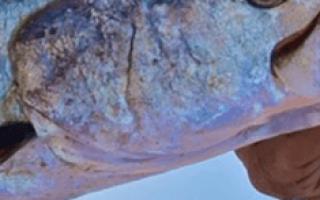 К чему снится улов крупной рыбы. К чему снится Ловить Рыбу? К чему снится поймать большую рыбу