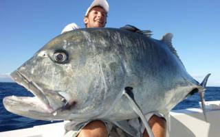 Поймать большую рыбу во сне. К чему снится поймать большую рыбу мужчине