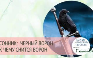 Сонник черный ворон сел. К чему снится черная ворона во сне? Толкование и значение