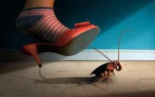 К чему снятся большие толстые тараканы. Сонник таракан большой