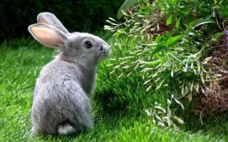 Кролик приснился во сне. К чему снятся зайцы и кролики