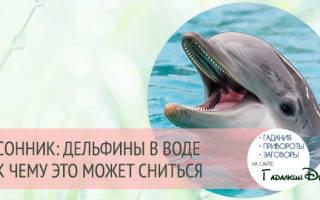 К чему снится дельфиненок. К чему снятся дельфины в воде