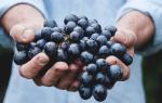 К чему снится белый виноград женщине. Вам приснился виноград? Современный сонник — ожидайте радостных событий