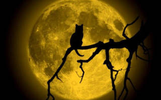 Полнолуние что можно просить у луны. Денежные ритуалы в полнолуние