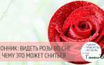 К чему снится розы от любимого человека. Сонник: красные розы