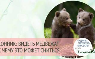 Что значит если снится медведица с медвежонком. Медведица с медвежатами толкование сонника