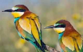 Снятся сказочные птицы. Сонник Птицы