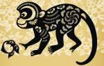 Стихия и талисманы года Огненной Обезьяны. Характеристика огненной обезьяны