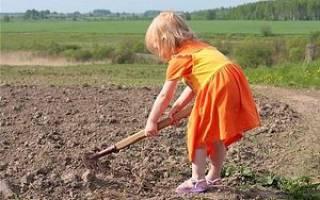 Церковные посты. Устав питания в период Великого поста