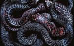 Снятся много больших змей. К чему снятся змеи женщине, мужчине