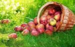 Когда ореховый спас в. Яблочный спас – приметы, ритуалы, обычаи