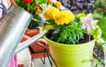 К чему снится поливать сад. К чему снится Поливать Цветы? К чему снится Поливать: толкование сна
