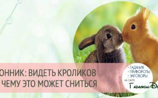 К чему снятся кролик. К чему снятся кролики, толкование сонников