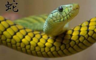 Водяная змея гороскоп на год. Гороскоп от именитых астрологов