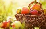 Яблочный спас переходящий праздник или нет. Яблочный спас — история праздника