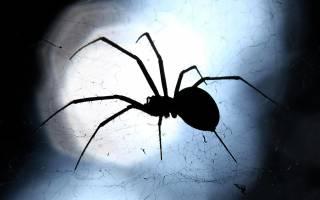 Пауков нельзя убивать потому что будет. К чему в доме появляются пауки