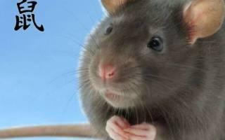Богатый человек по гороскопу крыса. Восточный гороскоп – Крыса